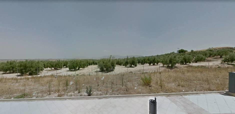 Terrenos de olivares donde estaba previsto levantar el proyecto